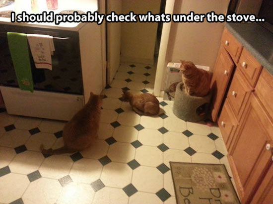 cats staring under stove, best funny pictures, funny pics, funny photos, funny pictures, funny vids, the best funny pictures, really funny photos, funny photos of animals, funny photos 2016, funny photos 2017, funny photos 2018, funny photos 2019, funny pics 2016, funny pics 2017, funny pics 2018, funny pics 2019, funny pictures 2016, funny pictures 2017, funny pictures 2018, funny pictures 2019, funniest pics 2016, funniest pics 2017, funniest pics 2018, funniest pics 2019, funniest pictures 2016, funniest pictures 2017, funniest pictures 2018, funniest pictures 2019, funniest photos 2016, funniest photos 2017, funniest photos 2018, funniest photos 2019, where to find funny pictures, funny pictures which made everyone laugh, where funny pictures, where to download funny pictures, where to find funny pictures with captions, where to get funny pictures for instagram, where to find funny pictures to share, where to find funny pictures to share on facebook, where to see funny pictures, funny pictures for instagram, funny pictures for facebook, funny pictures for memes, funny pictures for wallpaper, funny pictures for him, funny pictures for her, funny pictures for friends, funny pictures for snapchat, funny pictures like uberhumor, funny pictures like 9gag, funny pictures like facebook, funny pictures like, funny pictures like ifunny, funny stuff like pictures, funny pictures to text, funny pictures to photoshop, funny pictures to send, funny pictures to caption, funny pictures to post, funny pictures to make someone feel better, funny pictures to put on facebook, funny pictures to make you laugh, funny pictures to make you smile, funny pictures to brighten your day, funny pictures to brighten someone's day, funny pictures with words, funny pictures with no words, funny pictures without captions, funny pictures with jokes, funny pictures with dogs, funny pictures with cats, funny pictures without words, funny pictures without text, where can I find funny photos, best photos ever, best photo ever, silly photos, silly pictures, silly pics,