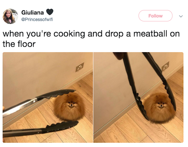 meatball dog, drop a meatball dog, best funny pictures, funny pics, funny photos, funny pictures, funny vids, the best funny pictures, really funny photos, funny photos of animals, funny photos 2016, funny photos 2017, funny photos 2018, funny photos 2019, funny pics 2016, funny pics 2017, funny pics 2018, funny pics 2019, funny pictures 2016, funny pictures 2017, funny pictures 2018, funny pictures 2019, funniest pics 2016, funniest pics 2017, funniest pics 2018, funniest pics 2019, funniest pictures 2016, funniest pictures 2017, funniest pictures 2018, funniest pictures 2019, funniest photos 2016, funniest photos 2017, funniest photos 2018, funniest photos 2019, where to find funny pictures, funny pictures which made everyone laugh, where funny pictures, where to download funny pictures, where to find funny pictures with captions, where to get funny pictures for instagram, where to find funny pictures to share, where to find funny pictures to share on facebook, where to see funny pictures, funny pictures for instagram, funny pictures for facebook, funny pictures for memes, funny pictures for wallpaper, funny pictures for him, funny pictures for her, funny pictures for friends, funny pictures for snapchat, funny pictures like uberhumor, funny pictures like 9gag, funny pictures like facebook, funny pictures like, funny pictures like ifunny, funny stuff like pictures, funny pictures to text, funny pictures to photoshop, funny pictures to send, funny pictures to caption, funny pictures to post, funny pictures to make someone feel better, funny pictures to put on facebook, funny pictures to make you laugh, funny pictures to make you smile, funny pictures to brighten your day, funny pictures to brighten someone's day, funny pictures with words, funny pictures with no words, funny pictures without captions, funny pictures with jokes, funny pictures with dogs, funny pictures with cats, funny pictures without words, funny pictures without text, where can I find funny photos, best photos ever, best photo ever, silly photos, silly pictures, silly pics,