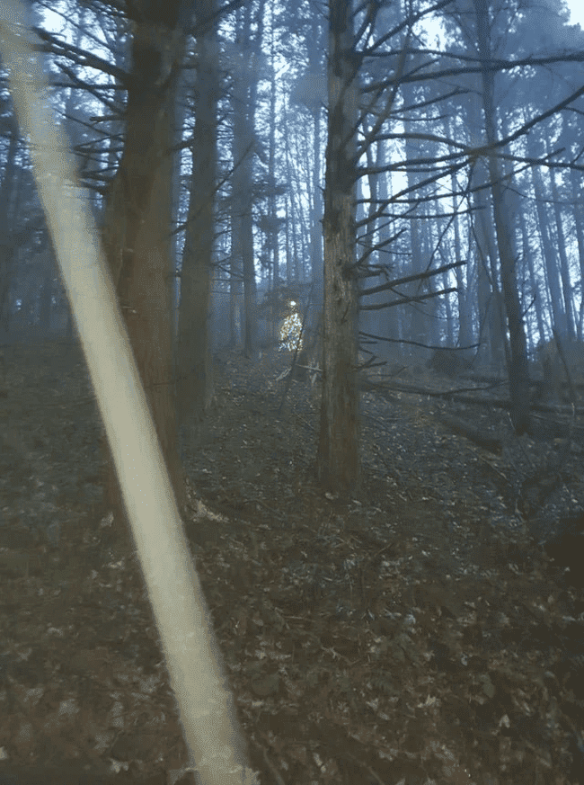 lighted tree in woods cursed image, lighted tree in woods cursed picture, lighted tree in woods cursed pic, cursed images, cursed image meme, r/cursed images, rcursed images, r cursed images, weird images