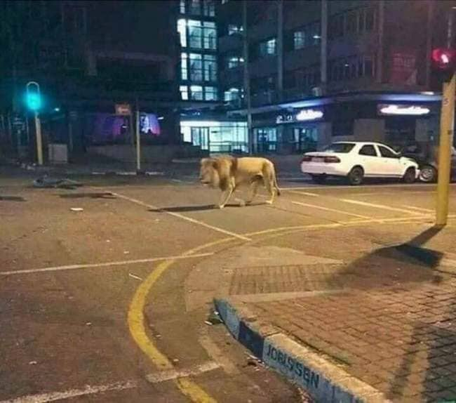 lion in street cursed image, lion in street cursed picture, lion in street cursed pic, cursed images, cursed image meme, r/cursed images, rcursed images, r cursed images, weird images, r/cursed images, cursed images meme, cursed photos, cursed pictures, cursed pics, weird pictures, cringe pictures, cringe internet, internet cringe pictures, cursed memes, cursed meme, cursed images, cursed memes, cursed images meme, edgy cursed images, r cursed images,rare cursed images, funny, cursed images, cursed pictures, cursed photos, cursedimages, weird cursed images,extremely cursed images, dank cursed images, very cursed images, cursed cursed images, cursed pics, food cursed images, best pictures ever, weirdest picture ever, worst memes ever, really cursed images, weirdest pictures on the internet, what is a cursed image funniest images ever, worst picture ever, very weird pictures, best images ever, weirdest photos ever, weirdest image ever, scariest pic ever, funny cursed memes, cursed images of people, weirdest photos on the internet, the coolest pictures ever, r cursed, worst images, how to make a cursed image, worst photo ever, worst images on the internet, cursed images wallpaper, worst photos, weirdest memes ever, the weirdest picture ever, worst picture on the internet, cursed memes images, weirdest pics ever, craziest pictures ever seen, images weird, world's weirdest pictures, best ever seen images, most weird pictures in the world, top 10 scariest pictures ever, the weirdest picture in the world, worst funny pictures, craziest pictures of all time, best images ever seen, worst pic ever, the weirdest pictures, horrible witch images, how to find cursed images, worst photo in the world, worst image ever, cringiest memes of all time, weirdest image on the internet, the most random photo, worst picture ever on the internet, cursed images collection, top cursed images, cursed images creepy, 10 most weird photos, funny cursed photos, best images ever in the world, horrible but funny pictures, cursed images party, the stupidest picture ever, cursed images bed, most horrible images, cursed images folder download, cursed internet