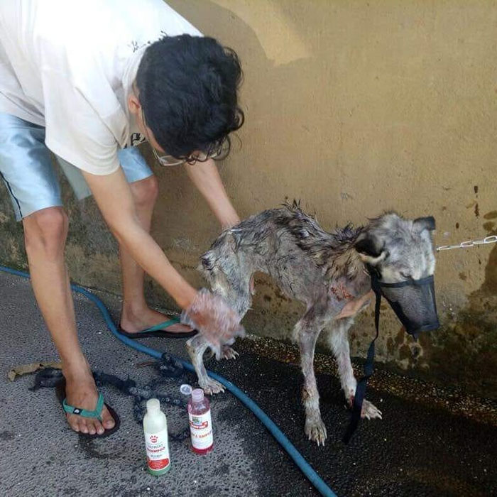 Guy Rescues An Abandoned Dog And She Was Actually A