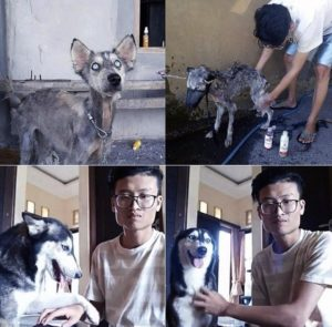 Guy rescues abandoned dog, dog transformations, rescue dogs before and after photos, people save abandoned animals, guy finds out rescue dog is a husky, husky nursed back to health, humanity, angel rescues starving dog, person rescues abused animal, husky, starving husky nursed back to health, Hope the Husky, trending story, feel-good story, dogs are better than people, dog lovers, animal lovers, people who love dogs, dog stories, stories about rescue dogs, dogs who need homes,