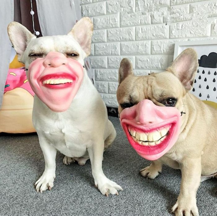 [Image: dont-buy-these-amazon-dog-masks-unless-y...life-8.jpg]