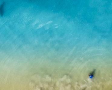 drone shark