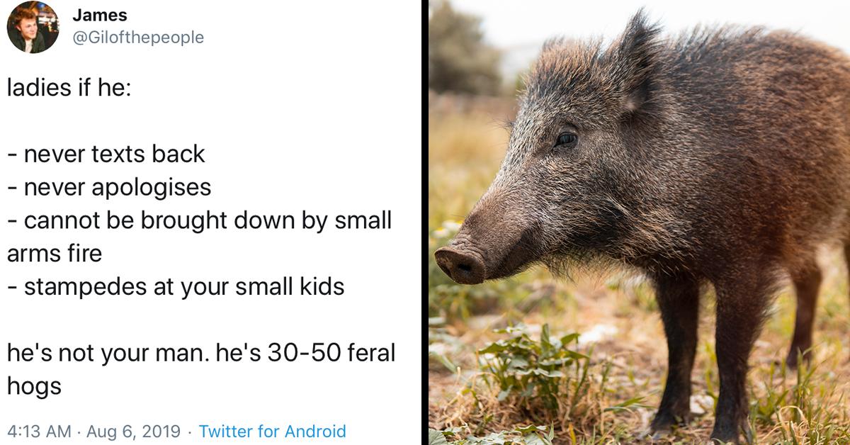 30-50-feral-hogs.jpg
