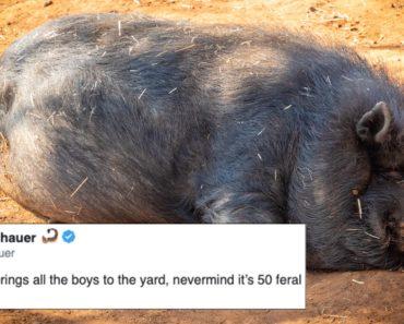 30-50 feral hogs memes