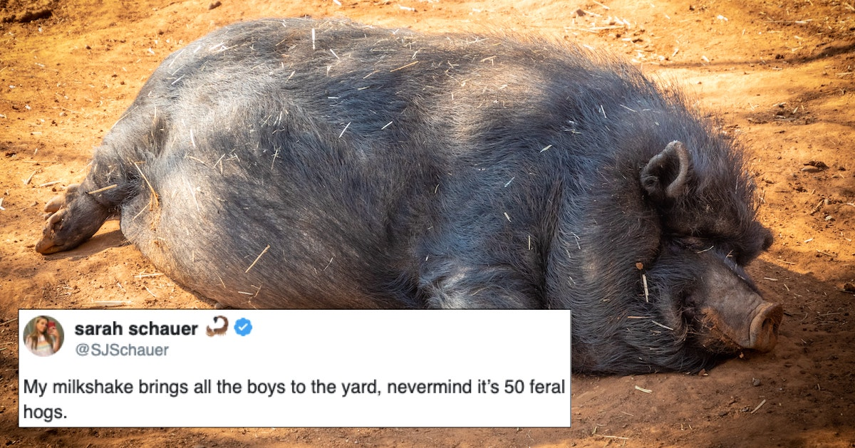 """Here's Why The """"30-50 Feral Hogs"""" Meme Has Taken Over The ..."""