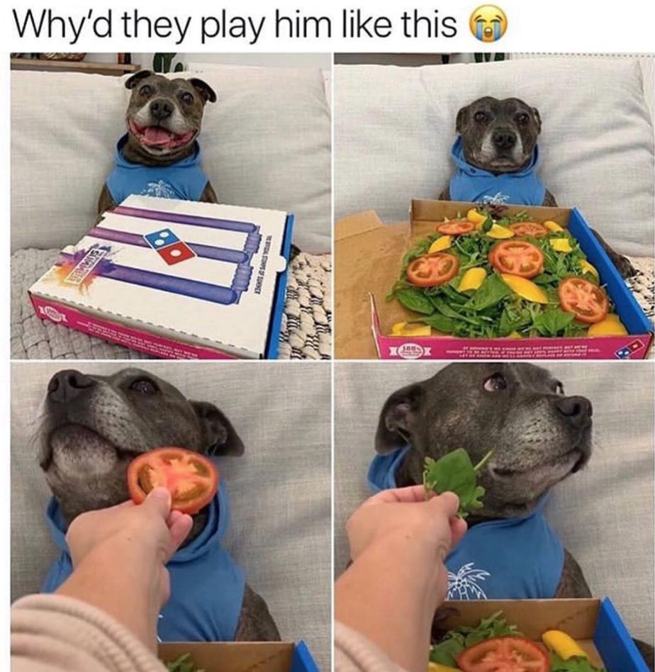 dog meme, dog memes, funny dog meme, funny dog memes, dog meme funny, dog memes funny, funny meme about dogs, funny memes about dogs, hilarious dog meme, hilarious dog memes, dog meme clean, dog memes clean, clean dog meme, clean dog memes, funny dog meme clean, funny dog memes clean, funny clean dog meme, funny clean dog memes