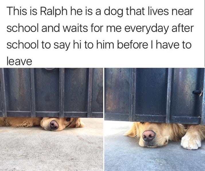 wholesome, wholesome pics, wholesome pictures, wholesome tweets, wholesome posts, wholesome memes
