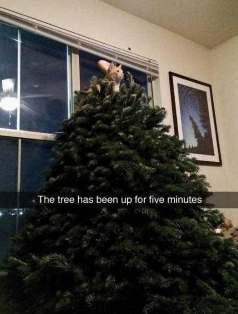 christmas memes, christmas meme, funny christmas meme, funniest christmas memes, best christmas jokes, best christmas memes, funniest xmas memes, xmas memes, grinch memes, santa memes, christmas memes 2019, christmas memes 2018