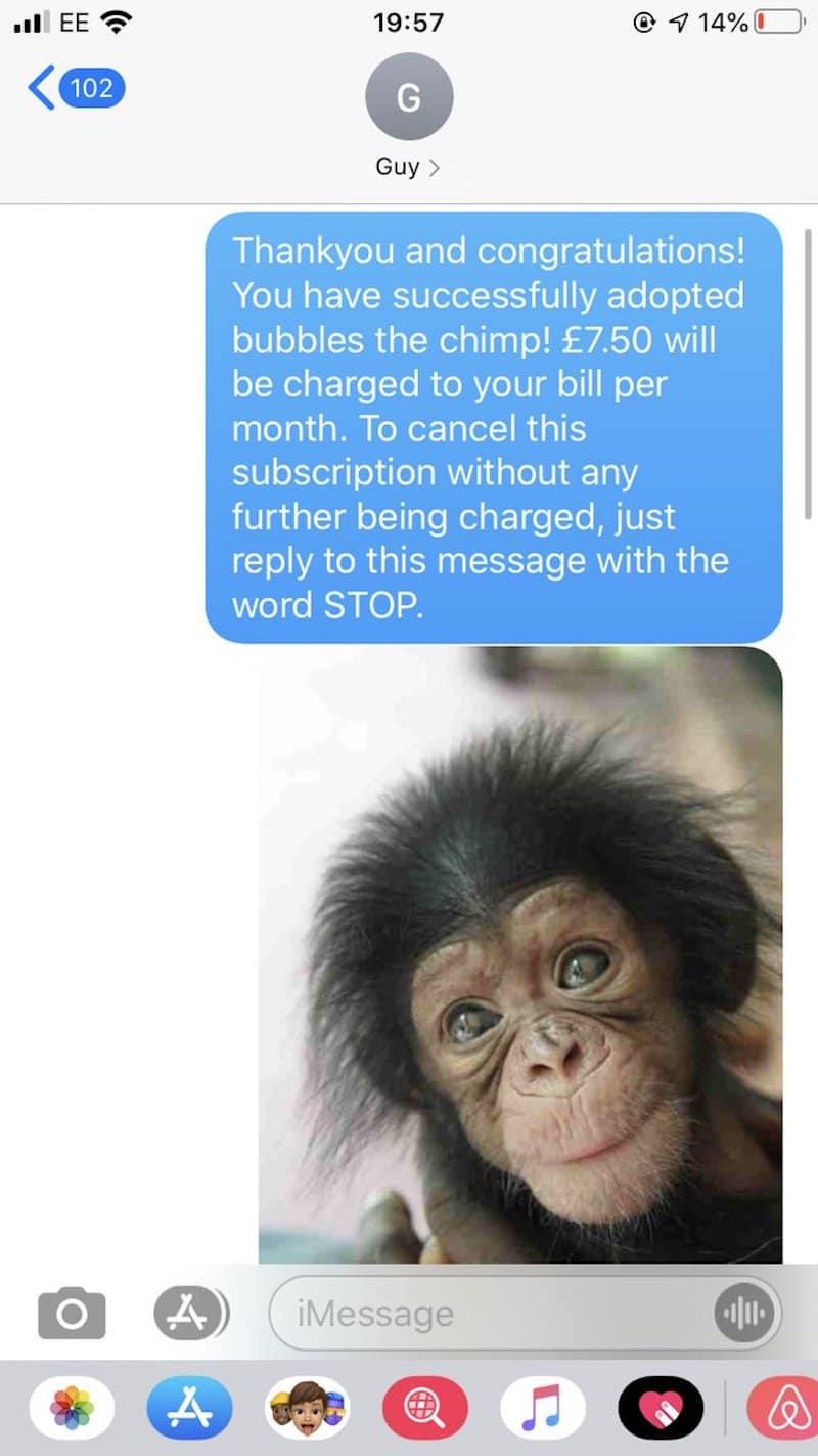 text prank, chimp text prank, text pranks