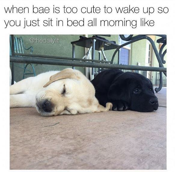 sit in bed all morning love meme, sitting in bed love meme, sitting in bed all morning love meme, love meme, love memes, meme about love, memes about love, funny love meme, funny love memes, lover meme, lover memes, I love you meme, i love you memes, meme love, memes love, meme on love, memes on love, love and affection meme, love and affection memes, wholesome love meme, wholesome love memes, funny i love you memes, funny i love you meme, love memes for him, love meme for him, love memes for her, love meme for her, wholesome memes love, wholesome meme love, i love you memes for him, love and support meme, i love you meme for her, funny love memes for him, funny love meme for her, funny love memes for her, cute i love you memes, cute i love you meme, sweet love memes, sweet love meme, love wholesome memes, love wholesome meme