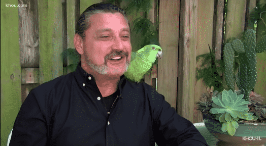 parrotyellshelp