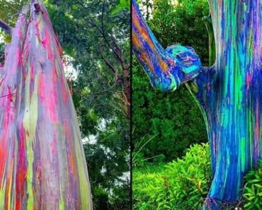 rainbow tree, rainbow trees