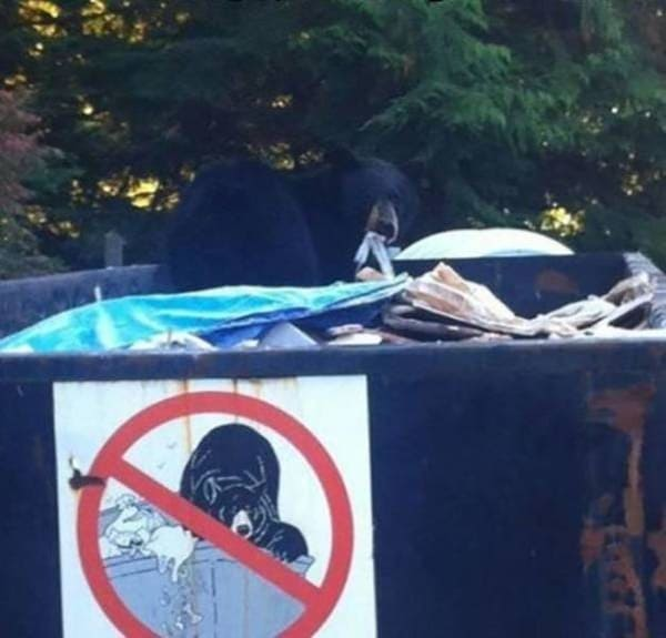 no bears in dumpster sign with bear in dumpster funny picture