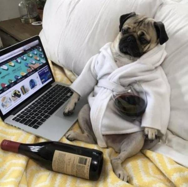 dog with wine and computer funny picture