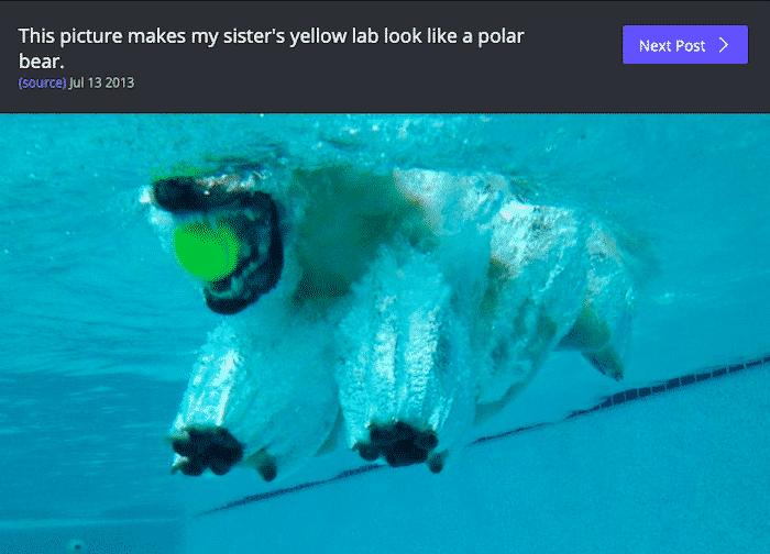 dog optical illusion, dog optical illusion pics