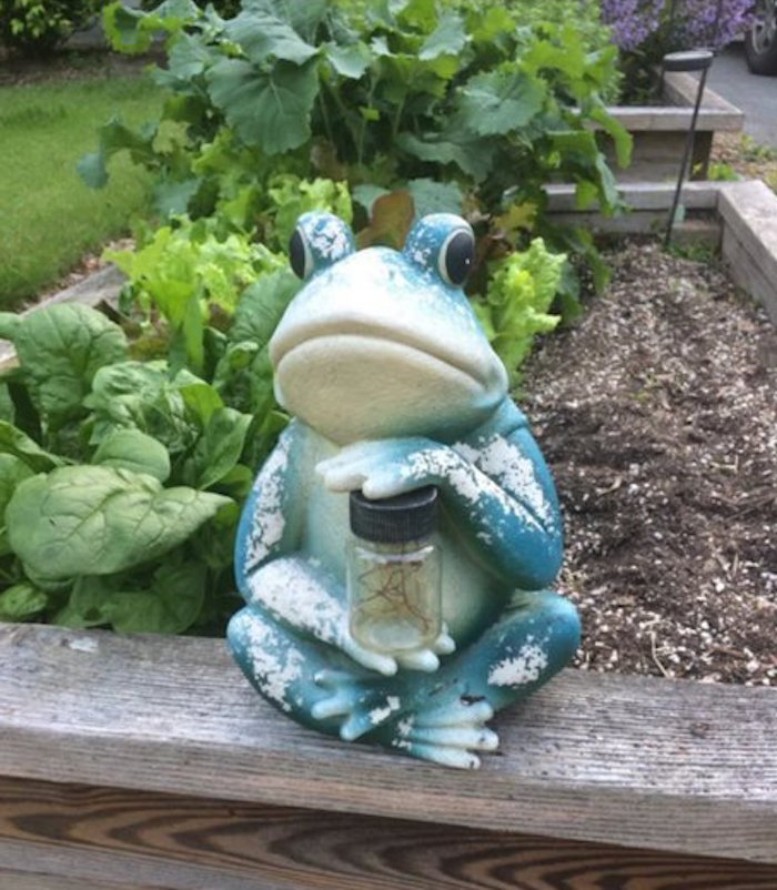 frog statue in question, supposedly scary frog, aita neighbor take down frog statue, aita frog statue, aita story, aita forcing neighbor to take down frog statue, forcing neighbor to take down frog statue, aita frog scares child, entitled woman, entitled person, entitle woman story, entitled person story