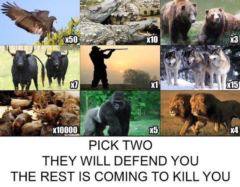 pick two meme, pick two animals meme, pick two to defend you meme