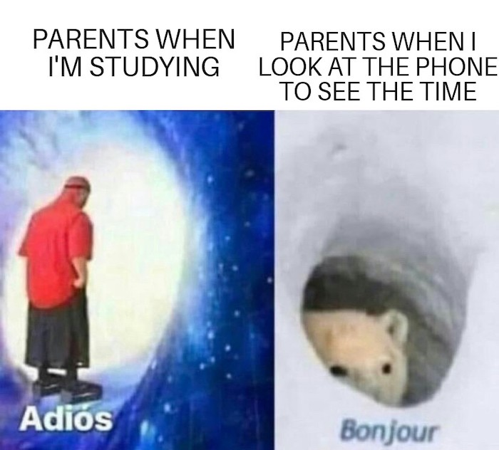 "28 Bonjour Bear Memes That Just Want To Say ""Bonjour"""