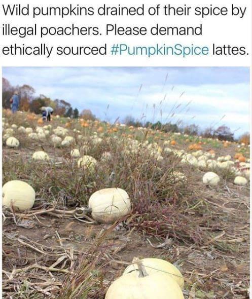 wild pumpkins drained of their pumpkin spice meme, funny wild pumpkins drained pumpkin spice meme, funny pumpkins drained pumpkin spiced latte meme