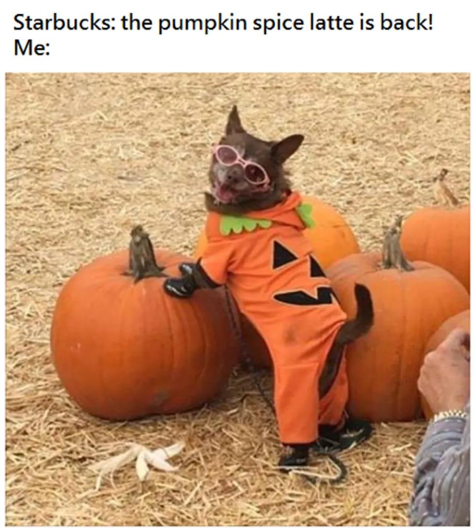 funny dog pumpkin spice latte meme, dog in costume pumpkin spice latte meme, funny dog wearing costume pumpkin spice latte meme