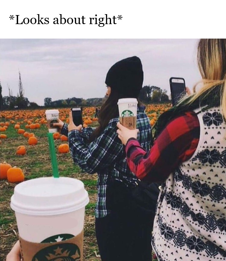 white girls pumpkin spice meme, white girls in their natural habitat pumpkin spice meme, looks about right pumpkin spice meme, taking pictures of pumpkins and pumpkin spice lattes meme