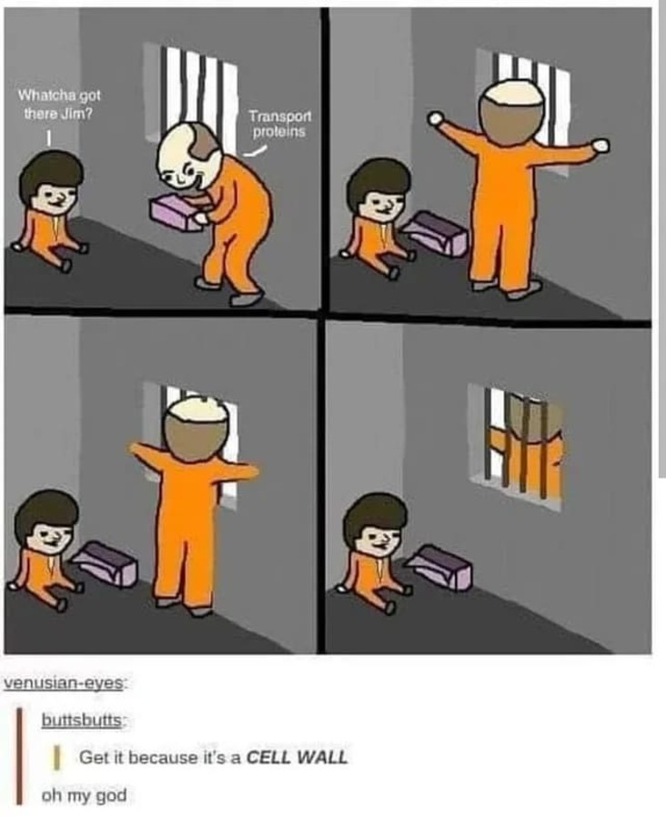 transport proteins science meme, cell wall science meme, funny cell wall science meme