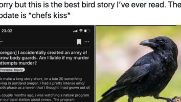 crows save neighbor